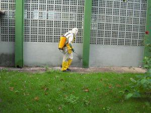 Desinsetização Porto Alegre