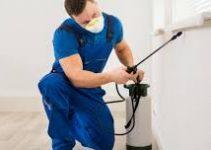 5 Sinais de que Você Deve Dedetizar sua Casa