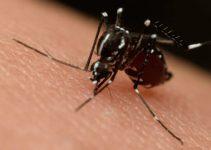 7 Dicas de Como se Prevenir do Mosquito