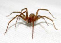 Confira Como Evitar Picadas de Aranhas