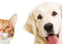 Dedetização Protege sua Família e Pets dos Carrapatos