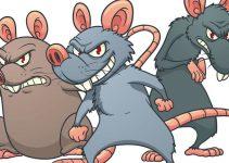 Infestação de Ratos no Condomínio o que Fazer
