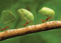 Métodos de Controle Dedetização Formigas