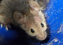 Tipos de Ratos Você Conhece Todos?