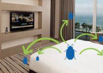 Dedetização de hotéis: veja tudo o que você precisa saber