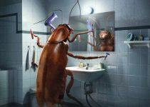 7 Motivos para Você ter Medo de Baratas