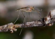 Cinco Coisas que Tornam Você um Ímã de Mosquitos