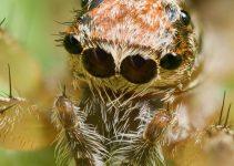 Veja Aqui 3 Fatos Sobre as Aranhas