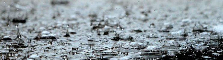 Dedetização – As Chuvas e As Proliferação De Pragas Urbanas